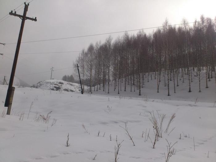 Зимние леса Ак-Тюза.