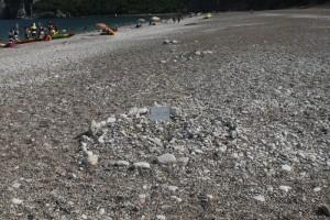 Кладка черепашьих яиц на пляже Чирали.