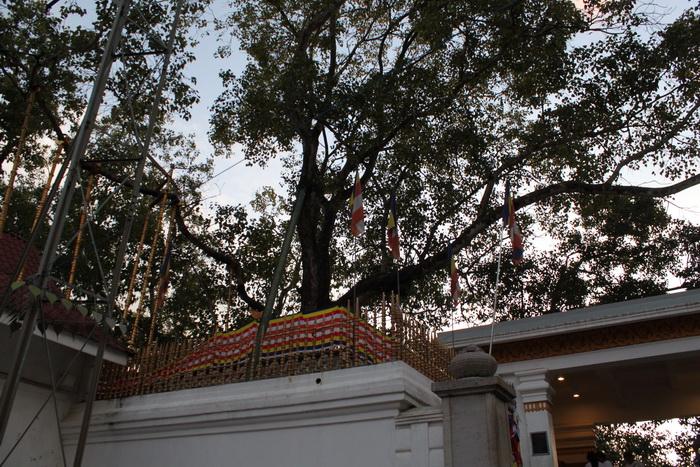 Анурадхапура. Дерево Шри Маха Бодхи.