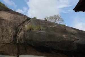 Дамбулла. Пещерный храм. Вездесущие макаки.