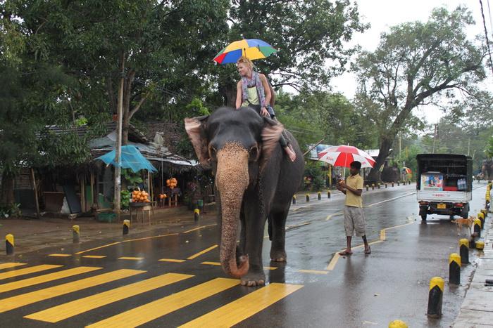 Шри-Ланка. Слон на улицах Сигирии.