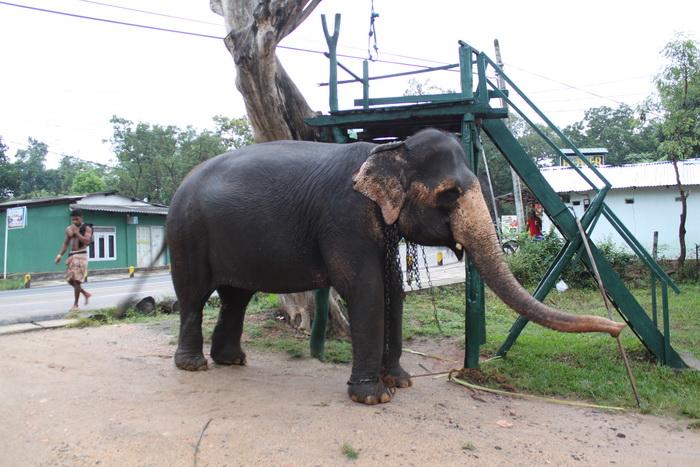 Шри-Ланка. Сигирия. Сафари на слоне.