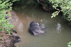 Шри-Ланка. Сигирия. Слон отдыхает после работы.
