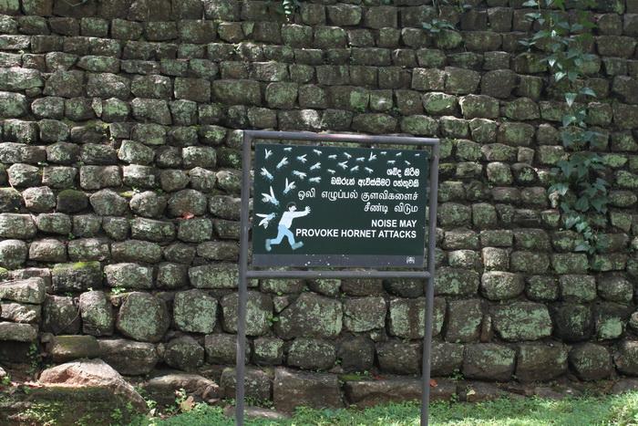 Шри-Ланка. Сигирия. Опасность диких шершней.