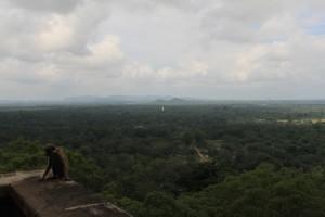 Шри-Ланка. Сигирия. Макаки попрошайки.