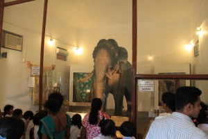 Канди. Храм зуба Будды. Боевой слон Раджа.