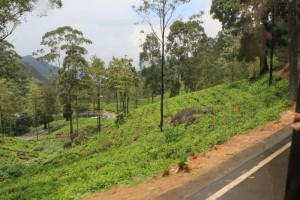 Чайные плантации по дороге в Нувара-Элию.