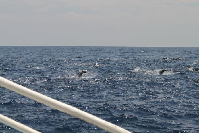 Мирисса. Дельфины.