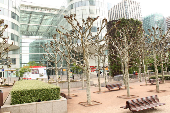 Париж. Дефанс. Странные деревья.