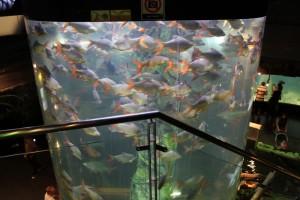 Куала-Лумпур. Океанариум Aquaria. Речные монстры.