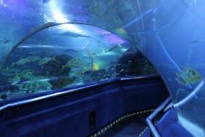 Куала-Лумпур. Океанариум Aquaria. Морские гады.