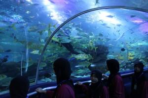 Куала-Лумпур. Океанариум Aquaria. Морские обитатели.