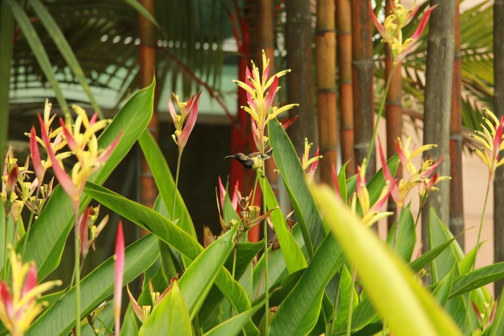 Куала-Лумпур. Растительность парка Taman KLCC.