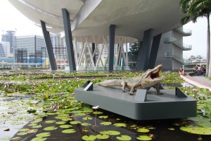 Сингапур. Лилии в водоеме под музеем науки и искусства.