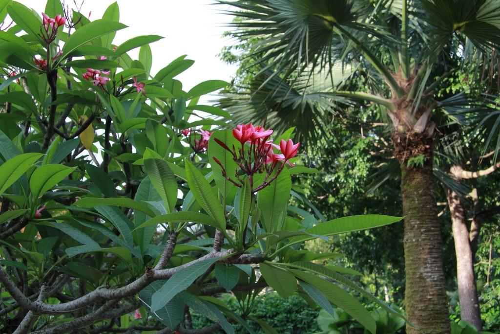 Сингапур. Национальный сад орхидей.