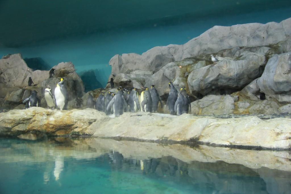 Сингапур. Парк птиц Джуронг. Пингвины.