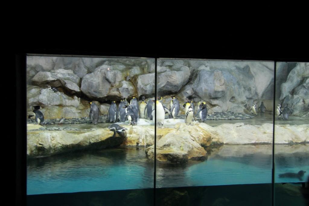 Сингапур. Парк птиц Jurong. Пингвины.