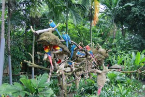Сингапур. Парк птиц Jurong. Попугаи Ара.