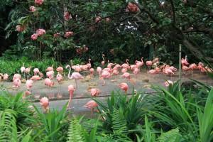 Сингапур. Парк птиц Jurong. Фламинго.