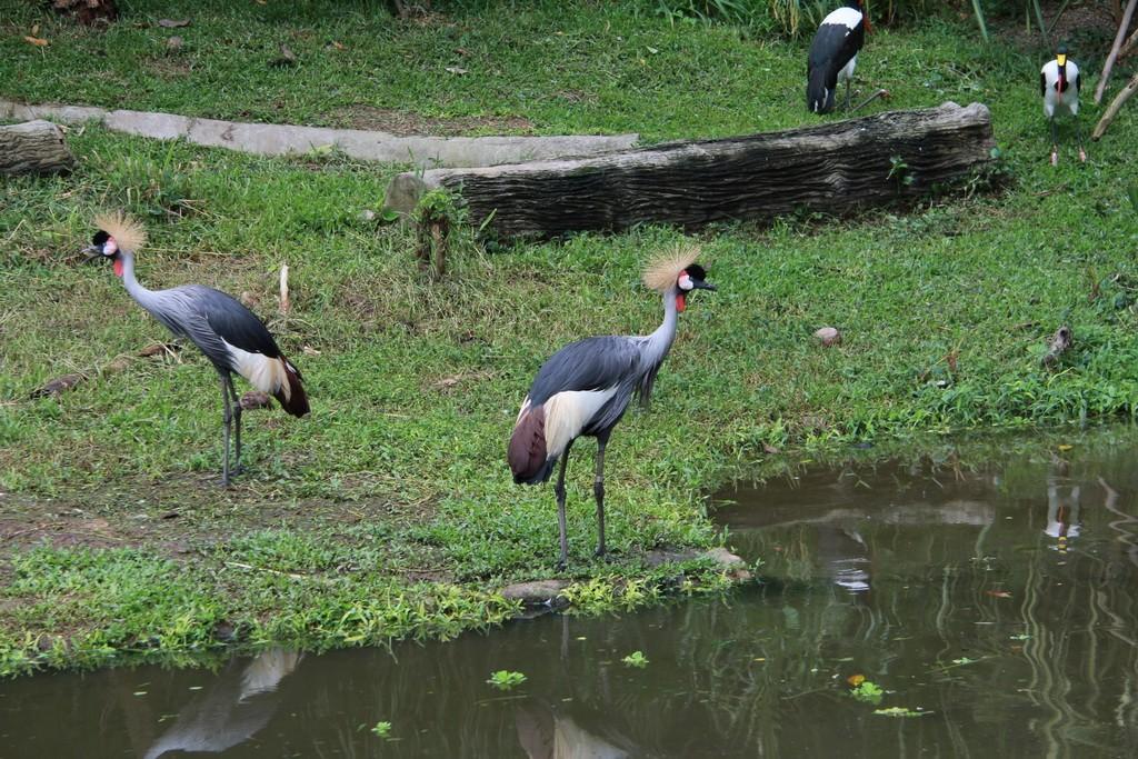 Сингапур. Парк птиц Джуронг.