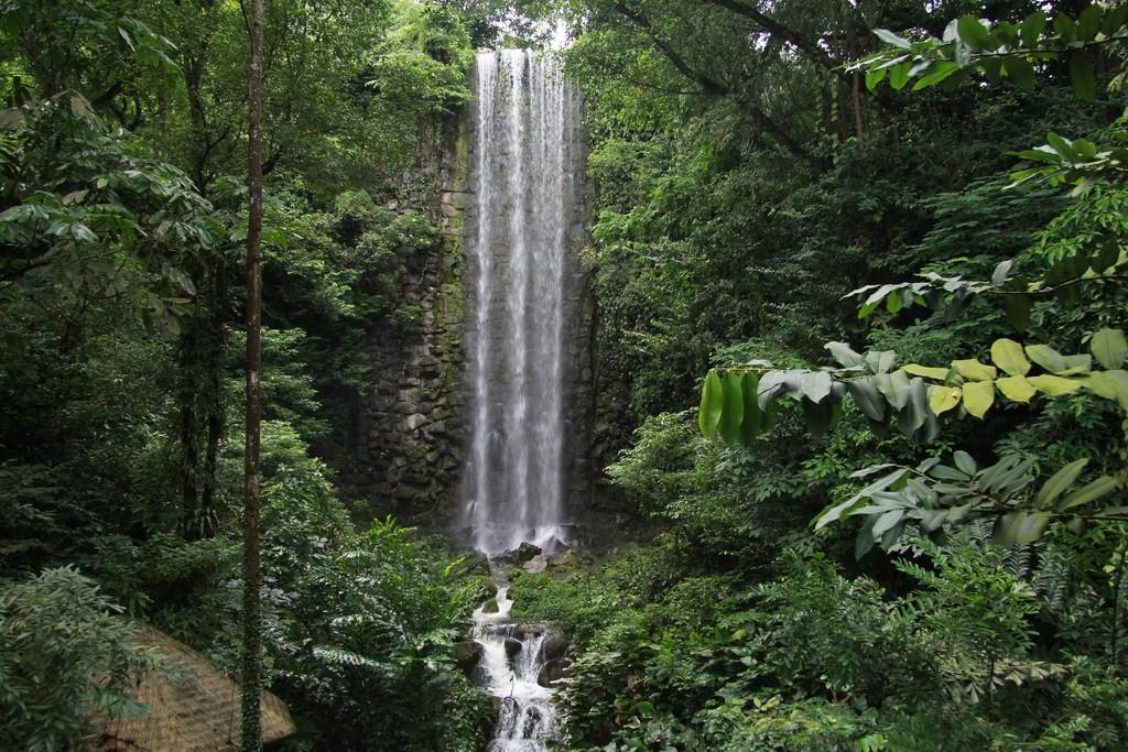 Сингапур. Парк птиц. Водопад.