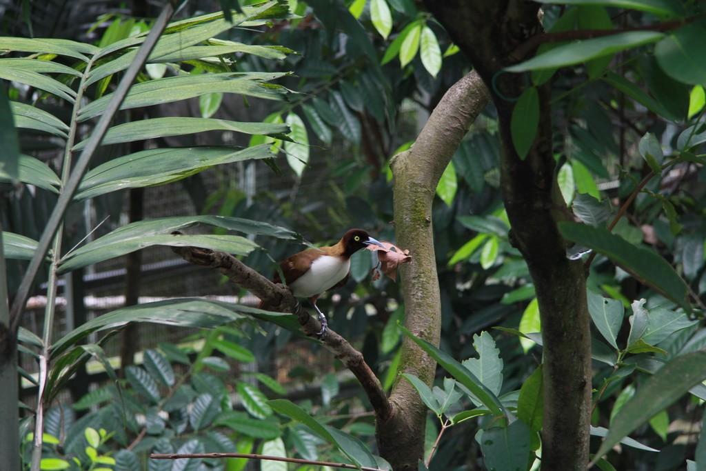 Сингапур. Парк птиц.