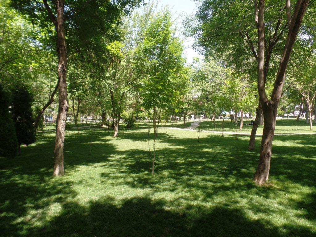 Ташкент очень зеленый город.